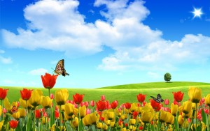 screensavers-widescreen-field-tulips-screensaver